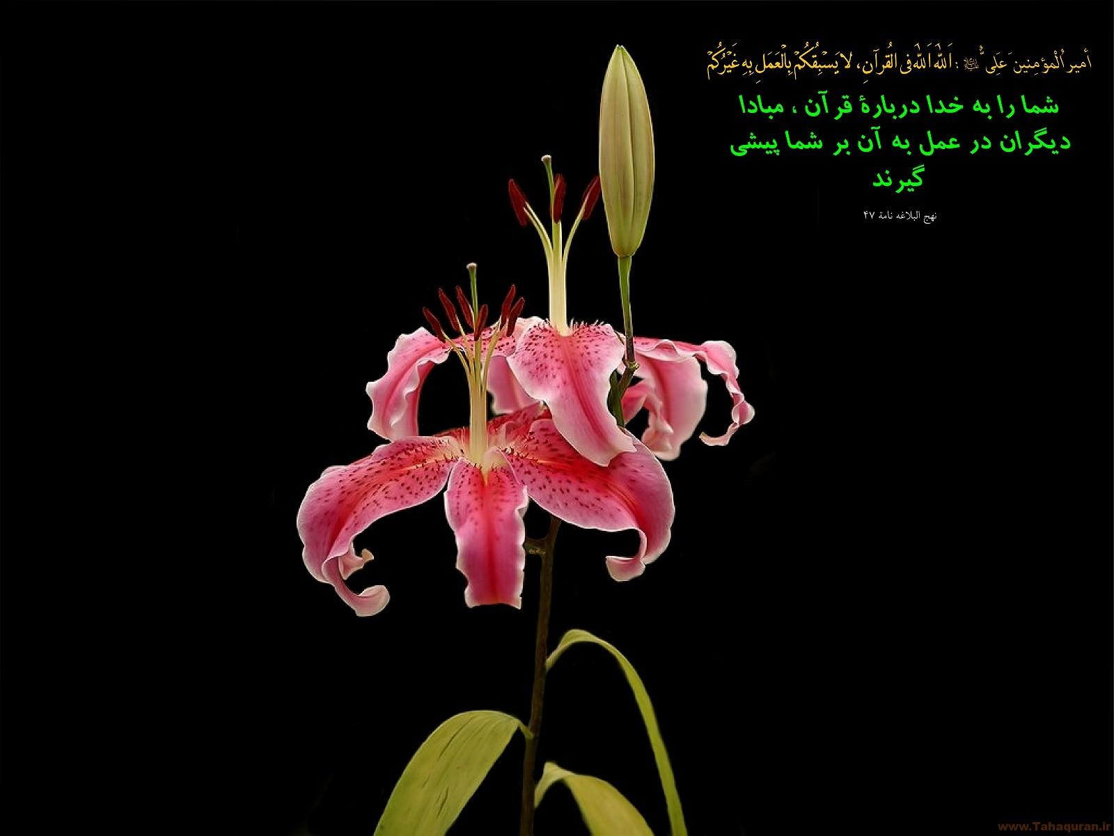 Image result for تصویر برای عمل به قرآن