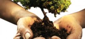 آیات و احادیث در مورد درخت و درختکاری